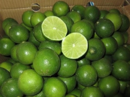 SEEDLESS LIME AND SMALL LIME